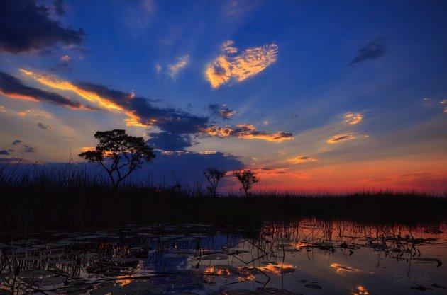 Heimwee naar Afrika...
