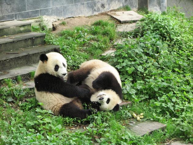 Panda speeltuin