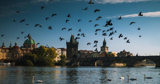 Duiven in Praag