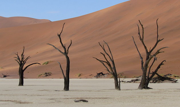 fossiele bomen