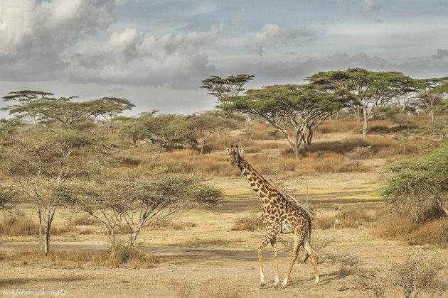 Een Afrikaans plaatje