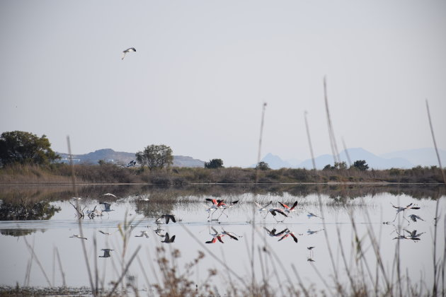 Flamingo's spotten op Kos, bij zoutmeer van Alikés