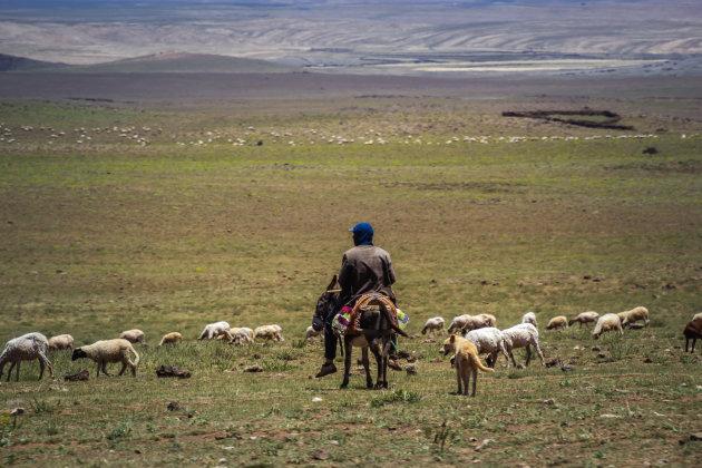 Herder op zijn ezel