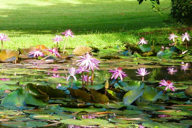 Leve de Lotus!