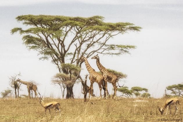 Nog een Afrikaans plaatje
