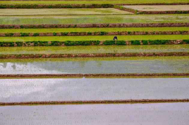 Oneindige rijst
