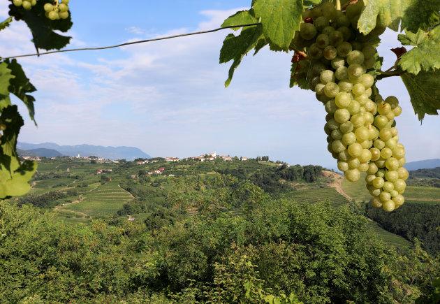 Wijnregio Brda