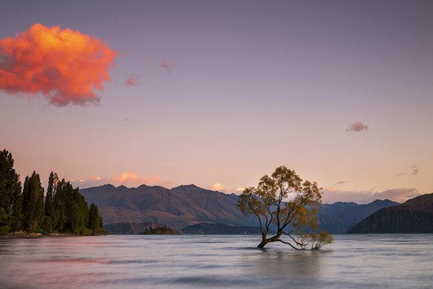 De beroemdste boom van Nieuw Zeeland