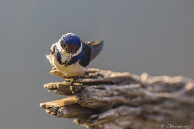 Vogelspotten in Zuid Afrika