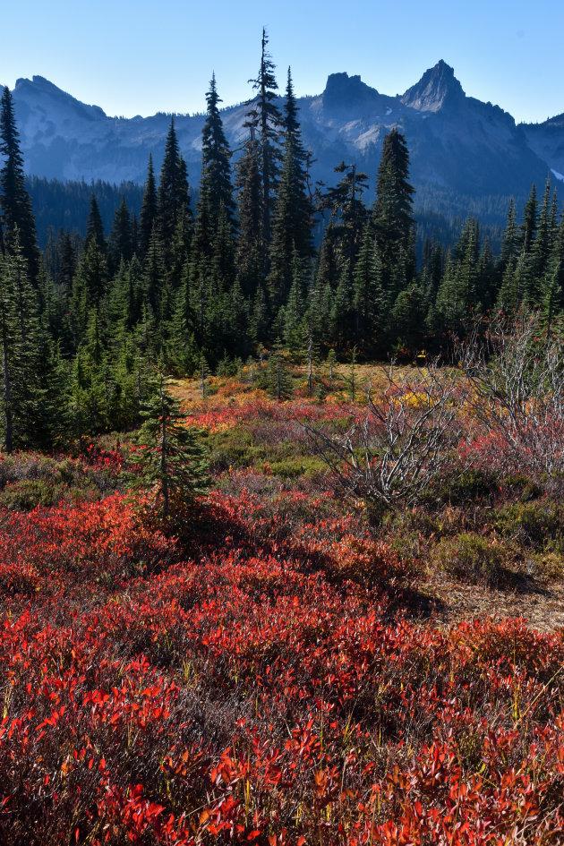Mount Rainier NP in herfsttooi