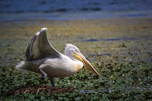 Balanceren op het nest