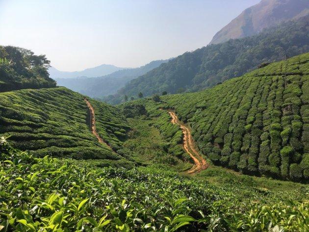 De theeplantages van Munnar