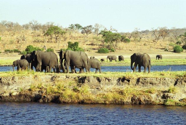 Genoeg olifanten