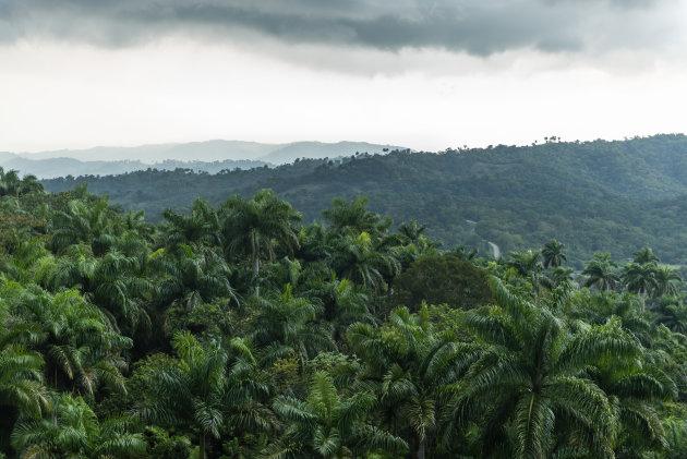 Slingerende de weg door de jungle