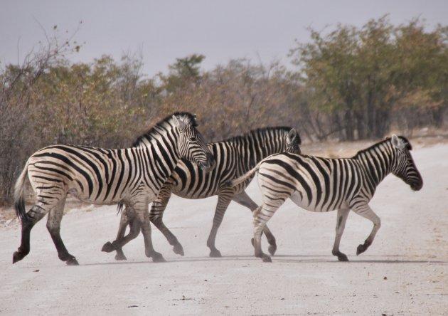 Zebra's in droog Etosha