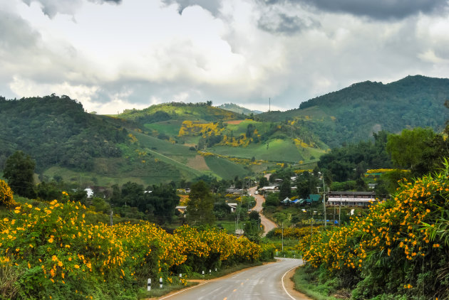 Thailand in bloei