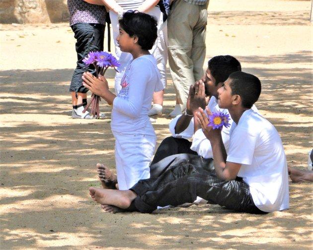 Bidden bij de Sri Maha Bodhi.