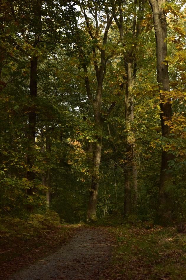Een zonnig herfstbos
