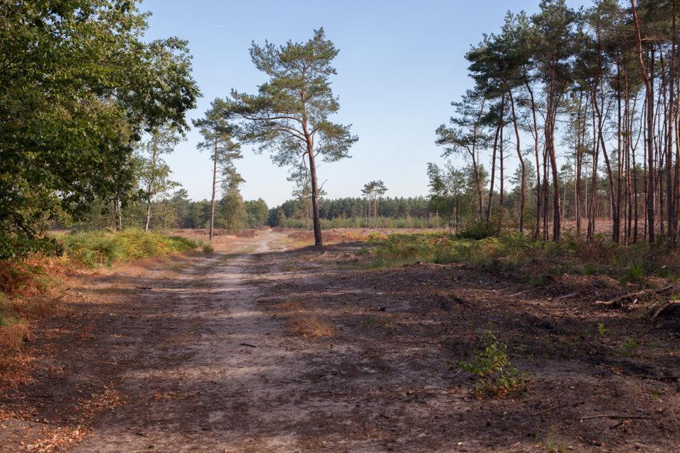 Het stiltegebied het Leenderbos, Noord-Brabant