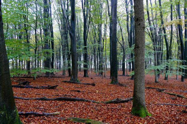 Herfst in Springendal