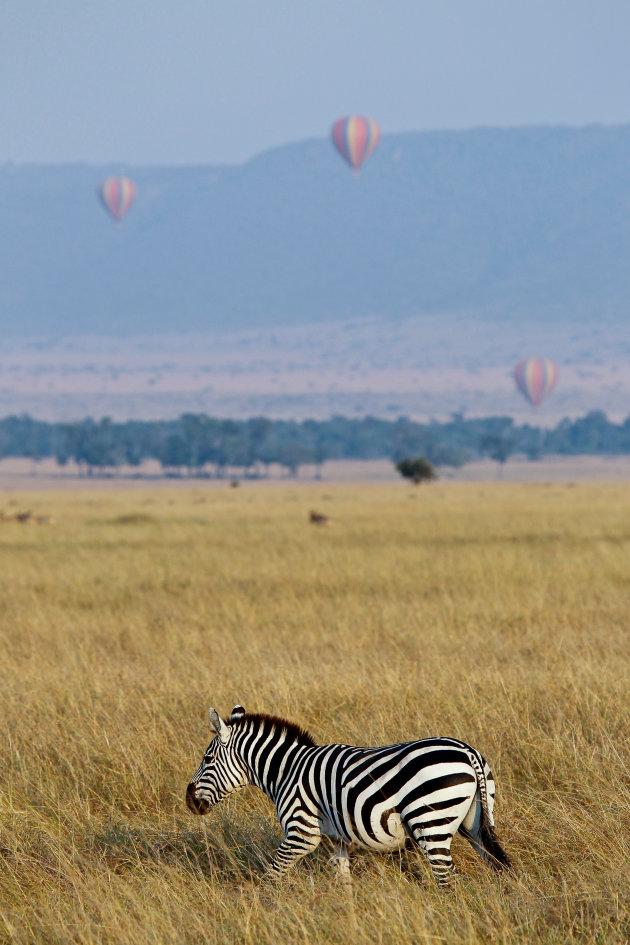 Luchtballonnen in Masai Mara