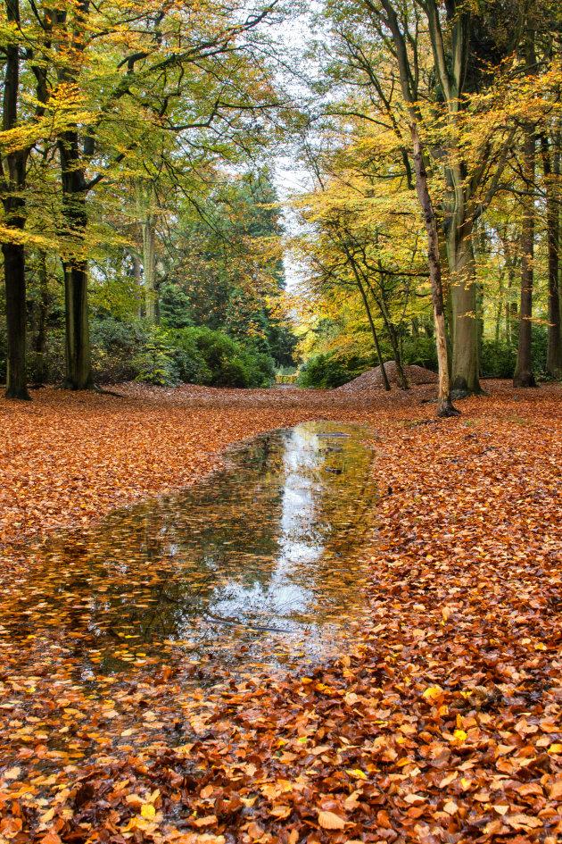 Spiegeling van de herfst