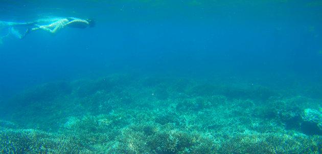 Snorkelen in Sri Lanka