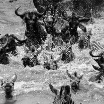 '1122446' door Karin Bloem - Wild Times Safaris