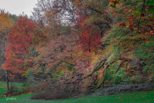 Kleurrijk Herfst
