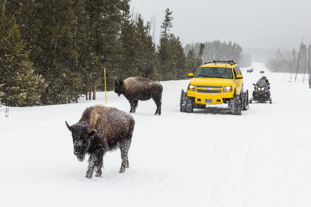 Hoe Yellowstone ontdekken in de winter