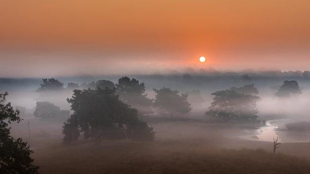 Quin in the Mist