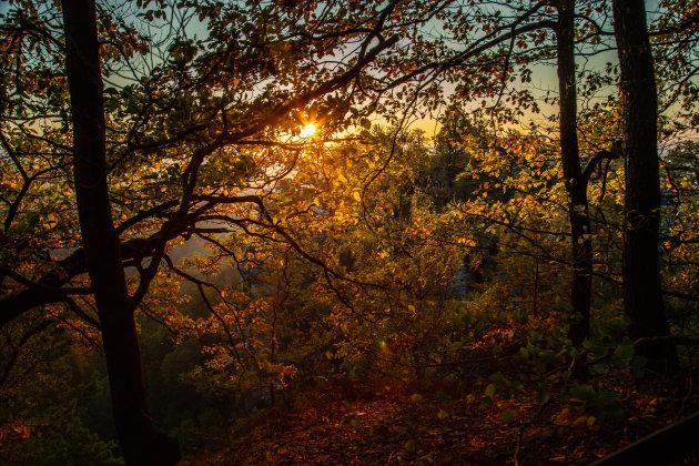 Een bos bij zonsopkomst