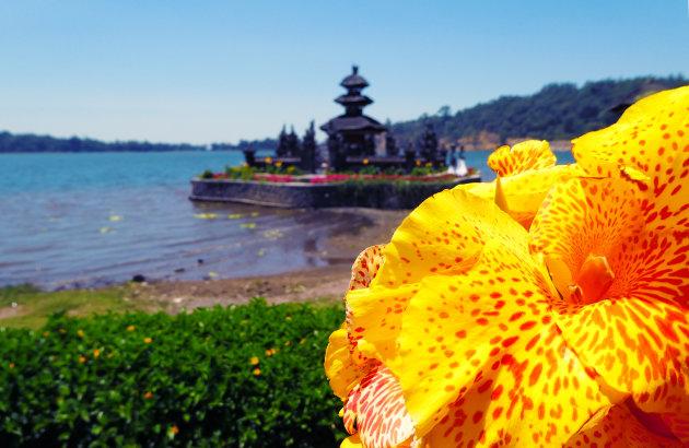 Flower Power aan het Bratan meer