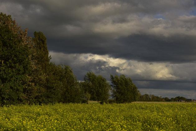 Mosterdveld onder een bewolkte lucht