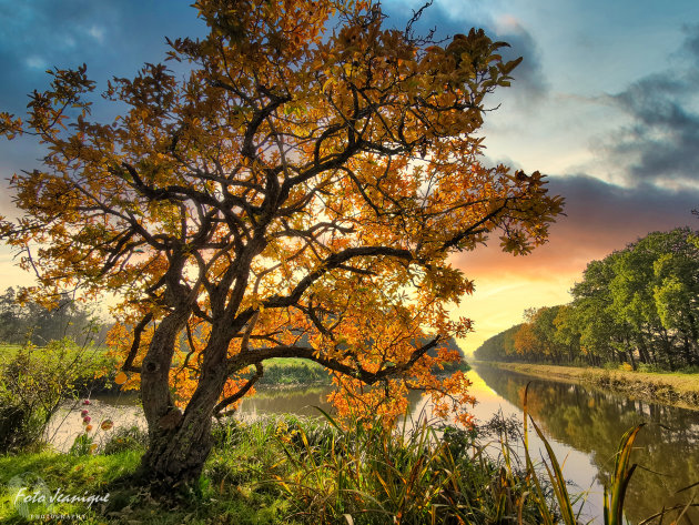 The Lock Keepers Tree