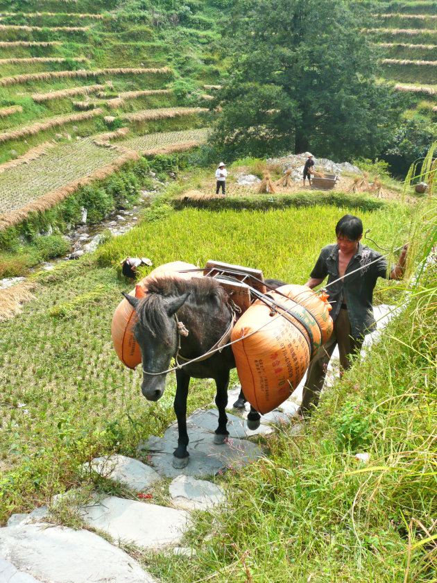Wandelen in omgeving van Ping'an