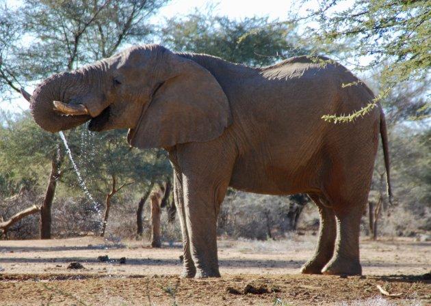 Dorstige olifant