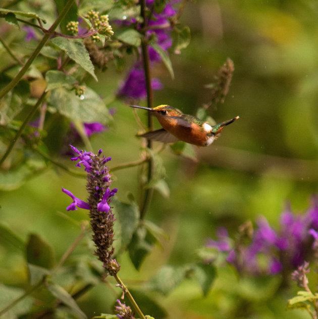 Nicaragua, flora en fauna