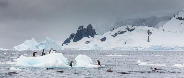 Zwemmen in het ijskoude water