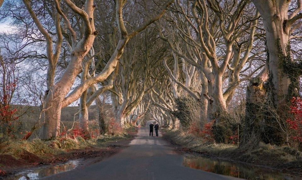 The Dark Hedges Noord-Ierland