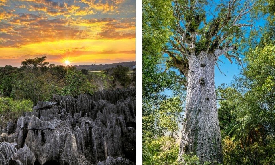 Tshingy Madagaskar / Kauribossen Nieuw-Zeeland