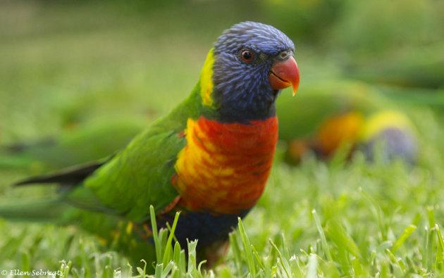 Vogelparadijs