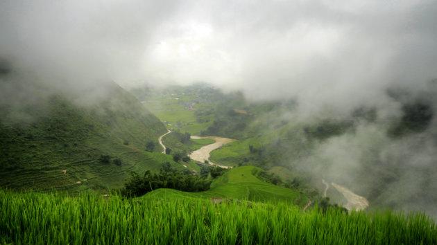 Mistige rijstvelden
