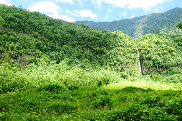 Ruig & weelderig Tahiti