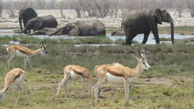 Wildlife Namibië