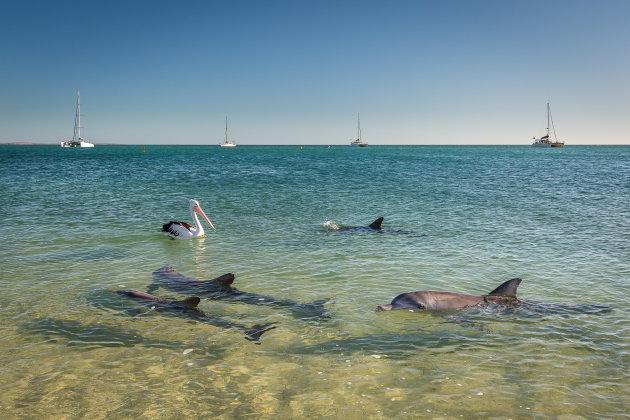 Dolfijnen langs het strand