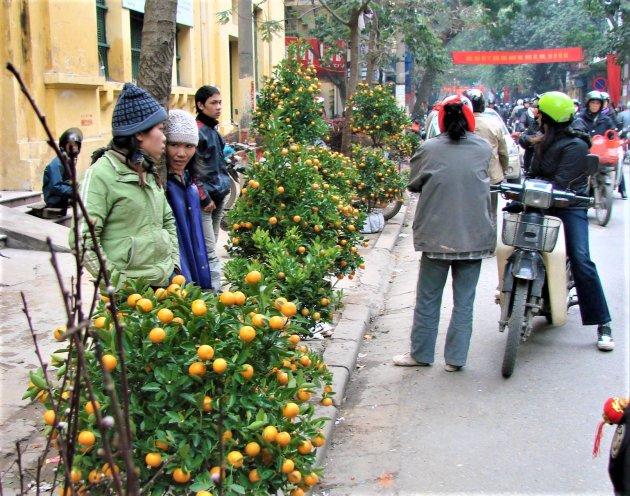 Kerstbomen verkoop in Vietnam.