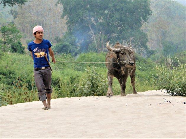 Boer met zijn buffel langs de Mekong.