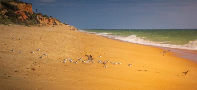 Vogels op het strand.