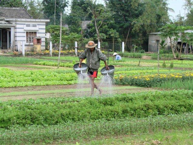 Planten watergeven.